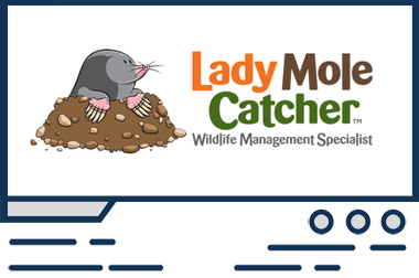Featured Web Design Lady Mole Catcher